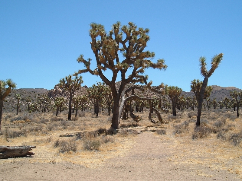 Joshua Tree National Park - this scene was used in 'Two Mule's for Sister Sarah' (Clint Eastwood)