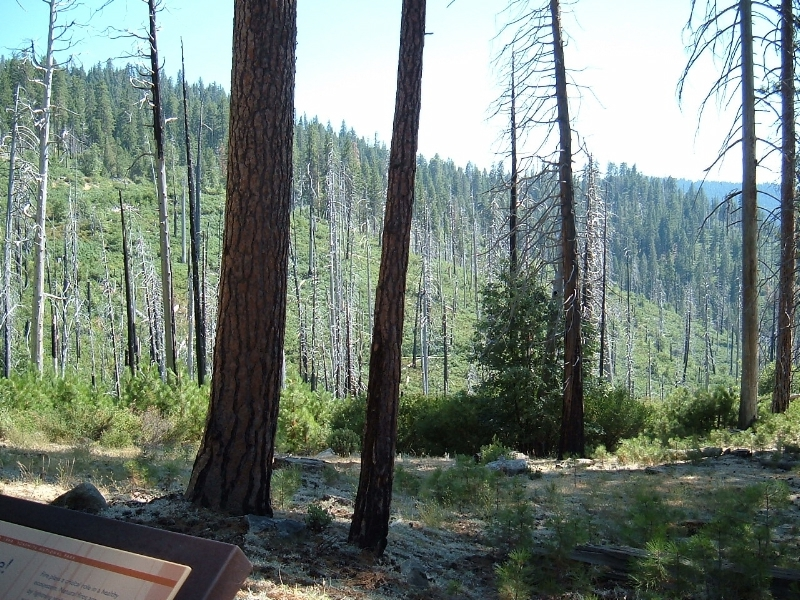 Fire management in Yosemite National Park