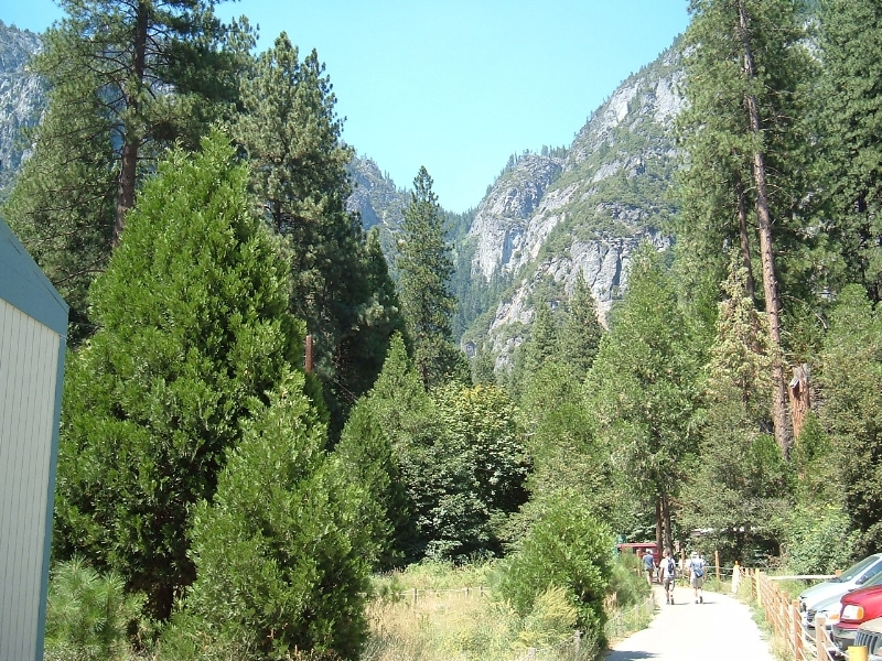 The walk into Curry Village, Yosemite National Park